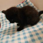 Smaller Kitten